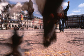 Palomas en la Plaza Mayor