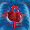 Nuevo sindrome de origen cardiovascular